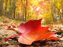 13 сентября Осенняя встреча в клубе «Колибри»